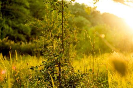 Sunny summer forest view. Vibrant landspace photo of green woods and grass. Standard-Bild - 110021934