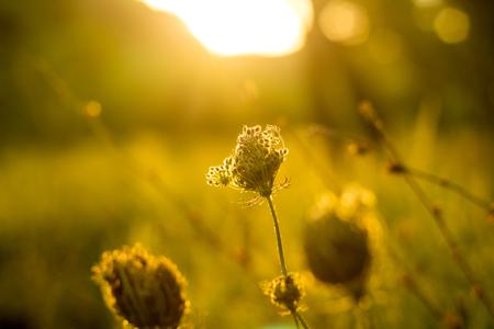 Vibrant meadow grass close up on sunset. Bright local landscape image. Standard-Bild - 110021936