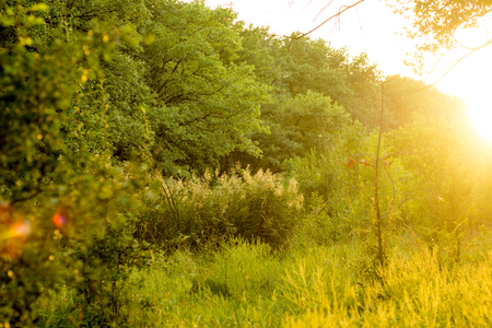 Sunny summer forest view. Vibrant landspace photo of green woods and grass. Standard-Bild - 110021937