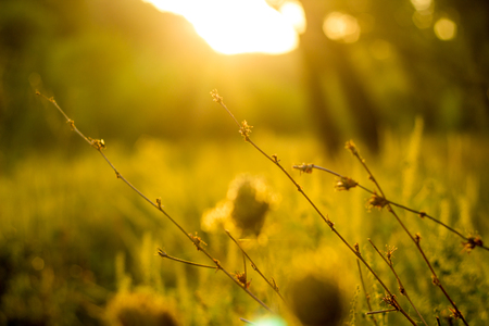 Vibrant meadow grass close up on sunset. Bright local landscape image. Standard-Bild - 110021938