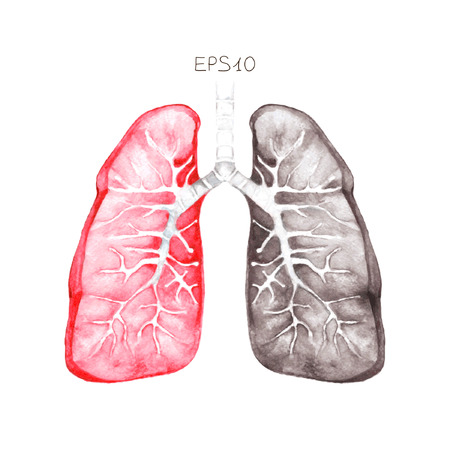 Human lungs, vector. Illustration