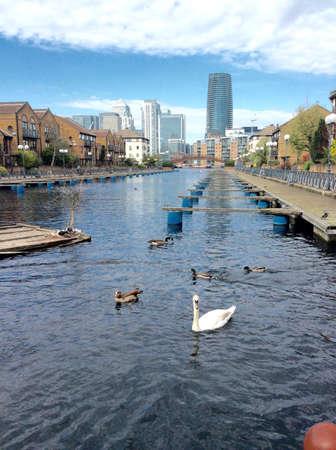 Millwall Dock in London