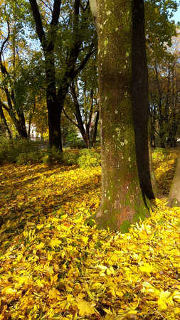 Beautiful romantic alley in a park with colorful trees and sunlight. autumn natural background. Reklamní fotografie