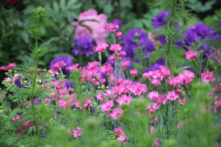 Beautiful purple spring flower meadow on colorful soft light background. Фото со стока