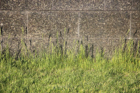 Green grass before gray stone grunge wall texture.