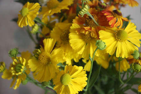 Yellow bouquet of autumn flowers. Astra calendula marigold tattules in bloom. Banque d'images