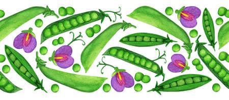 Watercolor green pea seamless border, easy to edit background. Nice Harvesting illustration for postcard, banner, autumn festival poster, print design, frame, washi tape, paper adhesive tape, ribbon 免版税图像