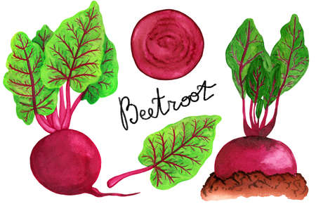Watercolor beetroot set isolated on white background. Whole beetroot, halm, garden bed and slice illustration. Vegetable group of objects with text Stock fotó