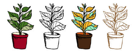 Ficus plant in different styles. Vector doodle houseplants set in outline, monochrome and coloring option. Hand drawn Rubber fig or benjamin fig tree in pot with big leaves on white background. EPS10