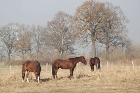Scenic view - horses eating hay on the background of trees photo