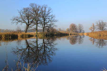 Bare trees without leaves reflected in water photo