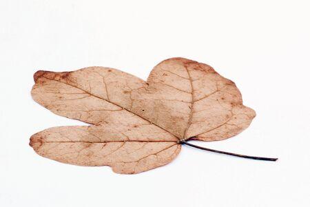 葉 写真素材
