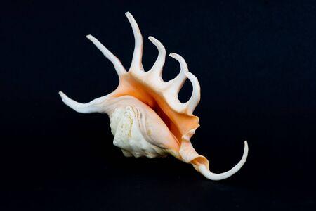 shell over black
