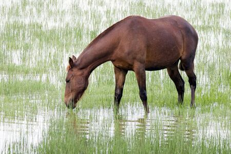 horse at do�ana