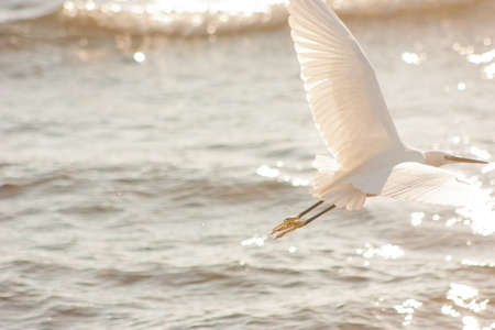 swell: Heron in flight and swell
