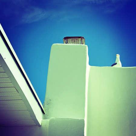 montauk: Summer seagull montauk