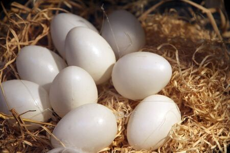 liege: Easter eggs on a nest ,Liege, Belgium Stock Photo