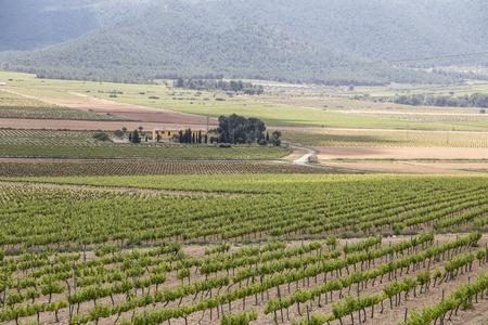 Spring vineyards Fontanars dels Alforins Valencian community Spain Stock fotó