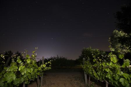 Spring vineyards by night Fontanars dels Alforins Valencian community Spain