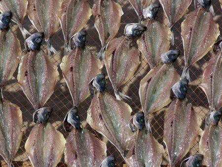 Fish drying Stock Photo - 726079