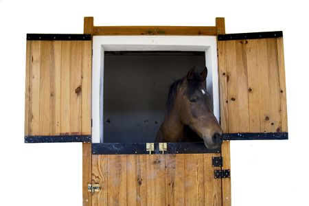 Horse head poking out a stable door