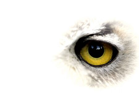 Owl big yellow eye - closeup Stock Photo