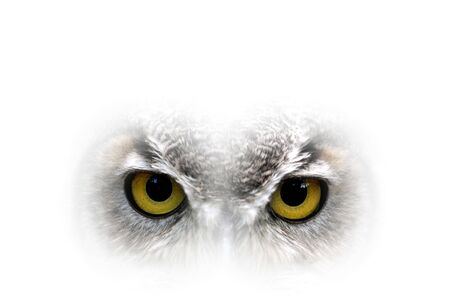 Owl big yellow eyes - closeup Stock Photo