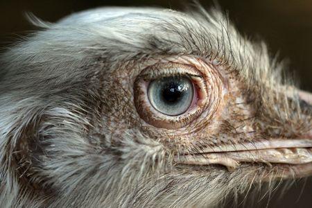 curiousness: ostrich close-up portrait