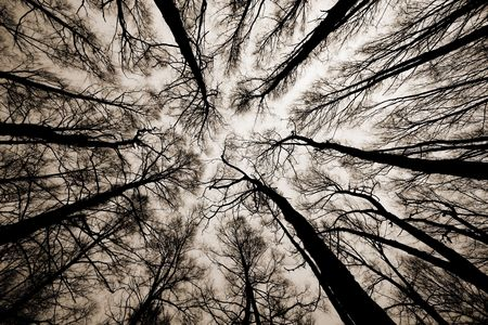 wasatch: A shot looking up at the sky in forest Stock Photo