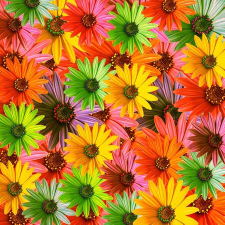 multi colored daisy flowers pattern background photo