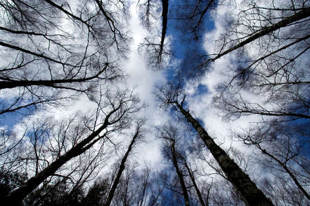 A shot looking up at the sky in forest Stock Photo