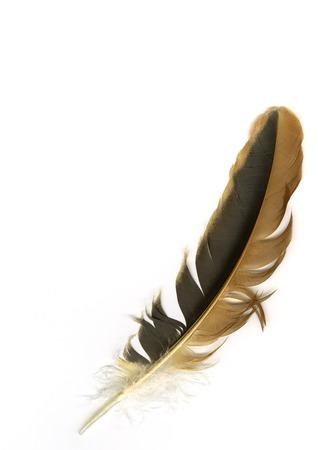 feather white: Bird piuma Archivio Fotografico