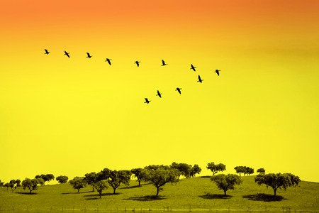 Green field with trees and birds in classic V formation