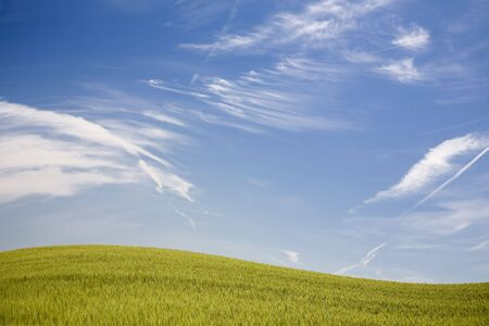 Green spring field with blue sky Stock Photo - 3585572