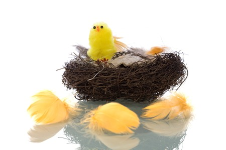 Birds Nest with feathers Isolated On White Background photo
