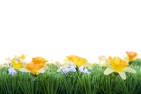 Grass with spring flowers against a white background Stock Photo