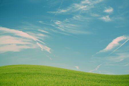 Green spring field with blue sky Stock Photo - 4797937