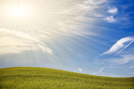 Green spring field with blue sky and shiny sunrays Stock Photo - 4797933