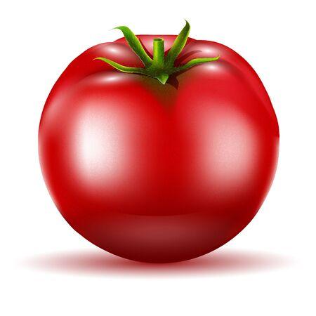 Tomato isolated. Realistic vector illustration.
