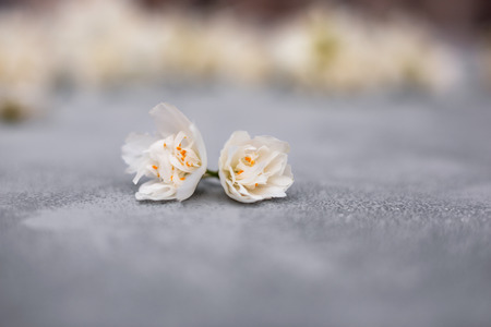 Small buds of white jasmine flowers on light bokeh