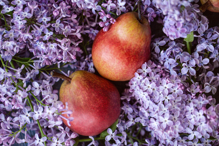 Nice lilac flowers with ripe juicy red and yellow pears. Close up. Copy space. View from the top. Stock Photo