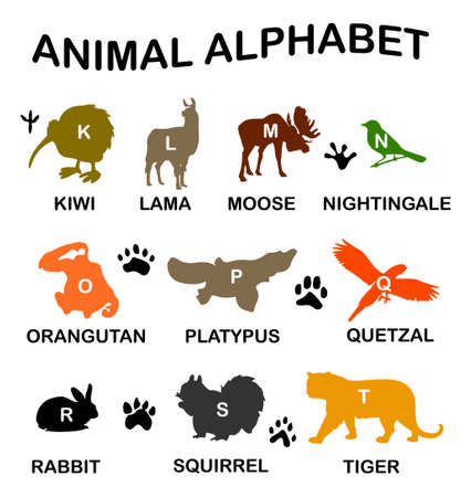 Animal alphabet - letters from K to T