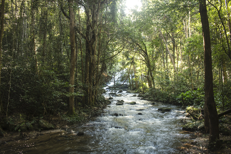 Flowing river in middle of amazing, lush green forest in exotic Mae Klang Luang. Chiang Mai, Thailand.