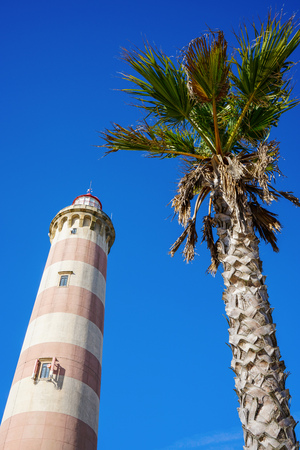 Low-angle photo of the Lighthouse of Praia da Barra next to a palm tree, during the day with a clear blue sky.