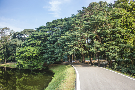 Beautiful view of asphalt road between gorgeous trees and lake, in sunny day. With copy space.