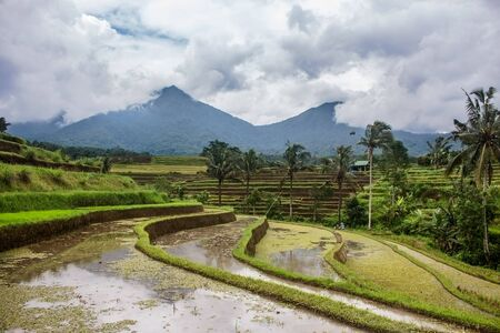 Flooded rice paddy terraced fields prior to planting. Mountains and palm trees in the distance. In Jatiluwih, Indonesia Stockfoto