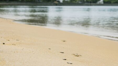 Tiny little crabs lying on golden sand. Sea water in background. Summer or beach vacation concept with copy space