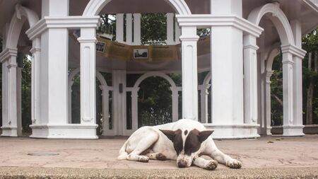 Stray brown and white dog sleeping in the floor of the entrance of Rang Hill View Points pavilion. In Phuket, Thailand