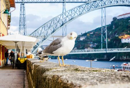 Horizontal close up photo of a curious seagull looking at camera, with blurry background.