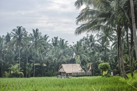 Horizontal photo of a typical Balinese landscape with traditional straw bale house, coconut palm tree forest, rice fields and Balinese flags in a cloudy day. Stockfoto